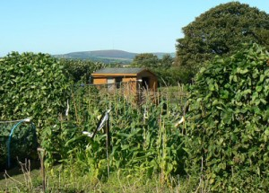 Haye Road Allotments